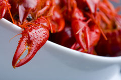 Boiled Crayfish in white bowl Royalty Free Stock Images