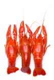 Boiled Crayfish in white bowl Stock Photos