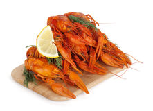 Boiled crayfishes Royalty Free Stock Images