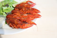 Boiled crayfishes Royalty Free Stock Photos