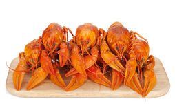 Boiled crayfishes on cutting board Stock Photos