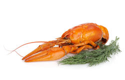 Boiled crayfishes with dill Royalty Free Stock Photography