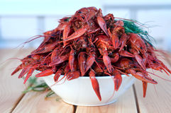 Boiled crayfishes with greenery on a plate Royalty Free Stock Image