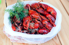 Boiled crayfishes with greenery on a plate Stock Photos
