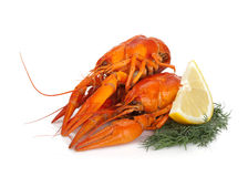 Boiled crayfishes with lemon slice and dill Royalty Free Stock Photos
