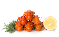 Boiled crayfishes with lemon slice and dill Stock Photography