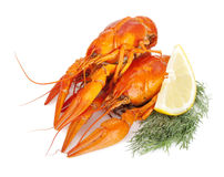 Boiled crayfishes with lemon slice and dill Stock Image