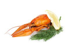 Boiled crayfish with lemon slice and dill Royalty Free Stock Photography