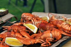 Boiled crayfishes and pieces of lemon. Stock Images
