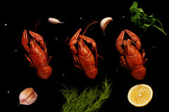 Boiled crayfishes with sea salt, garlic, lemon, parsley and dill Stock Photography