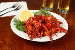 Boiled crayfishes on white plate Stock Photos