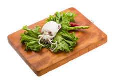 Boiled cuttlefish Stock Image