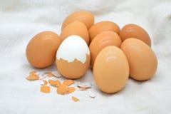 Boiled egg Stock Photos