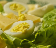 Boiled egg with the yolk lies on a  leaf salad with cheese near Royalty Free Stock Photos