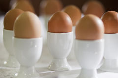 Boiled eggs. In white stand for eggs Royalty Free Stock Photography