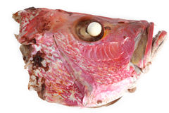 Boiled fish head Stock Photography