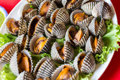 Boiled fresh cockles Royalty Free Stock Photo