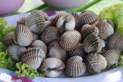 Boiled fresh cockles on lettuce vegetable for seafood serving. Boiled fresh cockles on lettuce vegetable Stock Photo