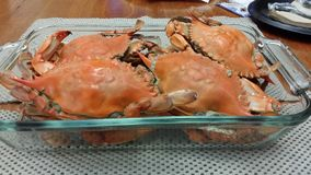 Boiled Fresh Crabs. Fresh crabs with claws boiled stock image