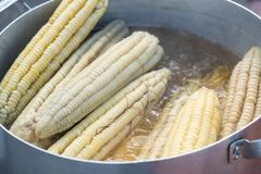 Boiled fresh white corn at street food.  Royalty Free Stock Images