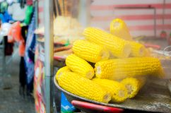 Boiled fresh yellow corn cobs on pan on market Royalty Free Stock Photography
