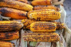 Boiled and fried corn. A North American cereal plant that yields large grains, or kernels, set in rows on a cob. Its many varieties yield numerous products stock photo