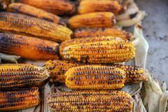 Boiled and fried corn. A North American cereal plant that yields large grains, or kernels, set in rows on a cob. Its many varieties yield numerous products royalty free stock photos