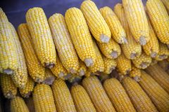 Boiled and fried corn. A North American cereal plant that yields large grains, or kernels, set in rows on a cob. Its many varieties yield numerous products stock photos