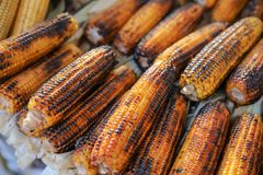 Boiled and fried corn. A North American cereal plant that yields large grains, or kernels, set in rows on a cob. Its many varieties yield numerous products royalty free stock images
