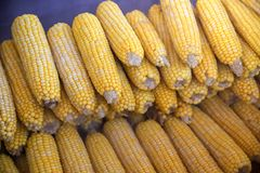 Boiled and fried corn. A North American cereal plant that yields large grains, or kernels, set in rows on a cob. Its many varieties yield numerous products royalty free stock photo