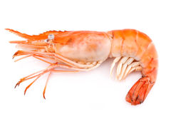 Boiled giant freshwater prawn Royalty Free Stock Photography