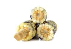 Boiled glutinous corn on white Stock Photo