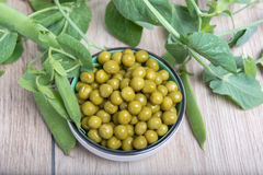 Boiled green peas, pods and branches Royalty Free Stock Photo