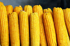 Boiled, hot corns Royalty Free Stock Images
