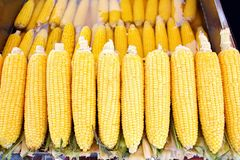 Boiled, hot corns Stock Images