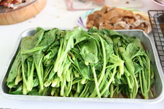 Boiled kale. Stock Image