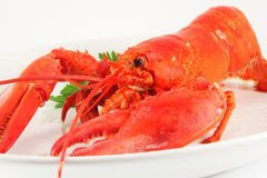 Boiled lobster Royalty Free Stock Image