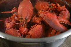 Boiled lobster. A pot of boiled lobster from Nova Scotia royalty free stock photo