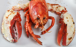 Boiled lobster. Stock Images