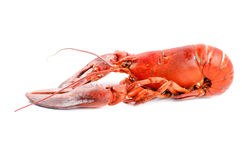 Boiled lobster isolated side view Royalty Free Stock Photography