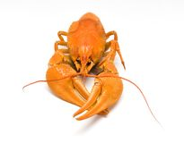 Boiled lobster isolated Royalty Free Stock Photography