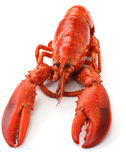 Boiled lobster Royalty Free Stock Photos