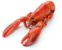 Boiled lobster Royalty Free Stock Images
