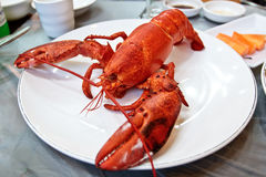 Boiled lobster on a plate Stock Photography