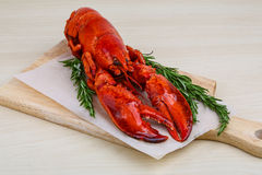 Boiled lobster Stock Photos