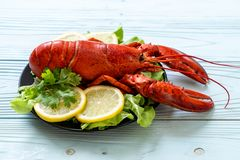 Boiled lobster with vegetable and lemon. Freshly boiled lobster with vegetable and lemon royalty free stock image