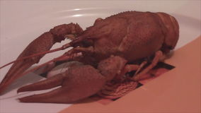 Boiled lobster on white plate stock video