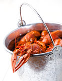 Boiled lobsters in bucket Royalty Free Stock Photography