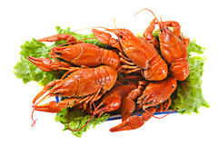 Boiled lobsters on a dish. The prepared lobsters on a dish with salad Stock Photography