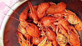Boiled lobsters. Royalty Free Stock Image